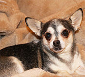 Missy - June 2014 Dog of the Month