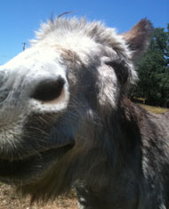 Fred the Donkey